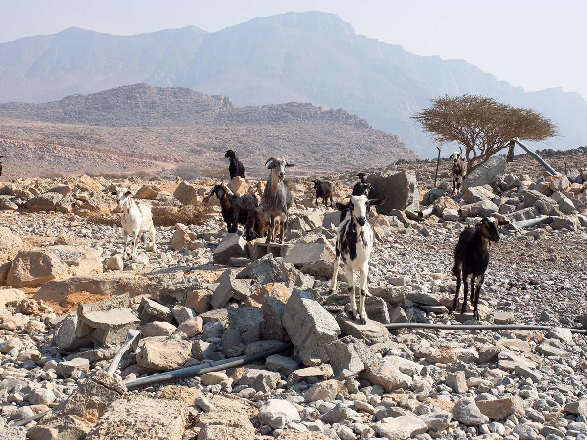 Tatsächlich leben in dieser unwirklichen Gegend noch Bergbauern mit Ziegen & Eseln
